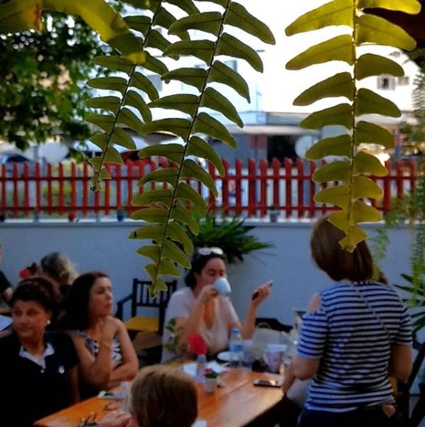 jardim do café 8